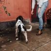 Obrázek z Hárací kalhotky pro psy jednorázové 15ks