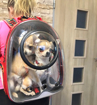 Obrázek z Batoh pro psy a kočky NastrojanPets