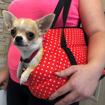 Obrázek z Taška pro psa cestovní - puntíky