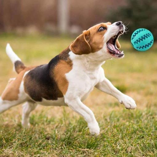 Obrázek z Žvýkací dentální míček pro psy